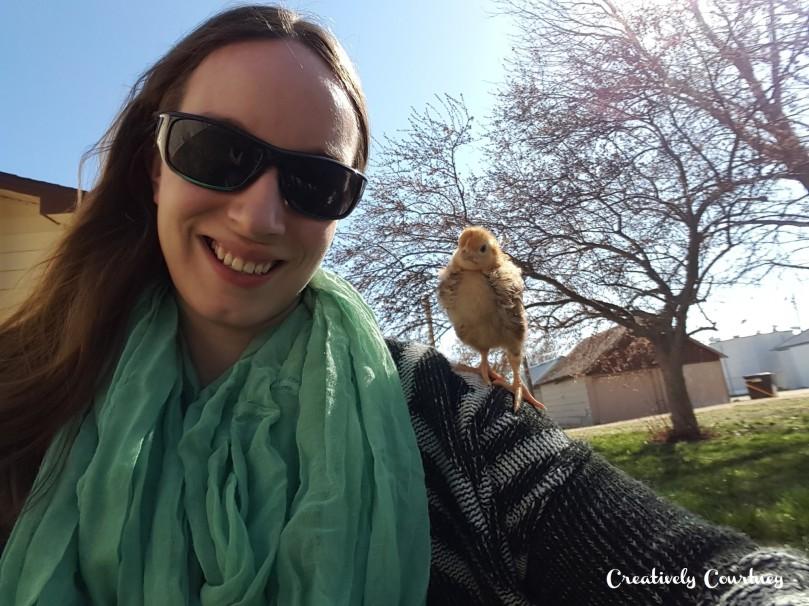 Chicks Update 1