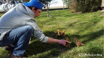 Chicks Update 2